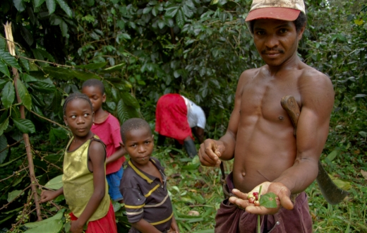A family picking coffee on São Tomé. Photo: Sigurd Jorde